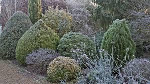 garden design which bedding plants go
