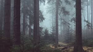 Misty Forest Wallpapers Top Free Misty Forest Backgrounds