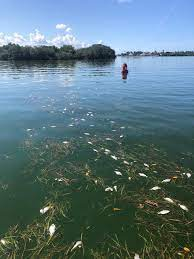 Are tourists concerned about red tide ...