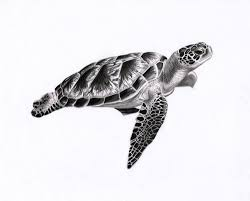 Small Picture Turtle Drawings Coloring Page