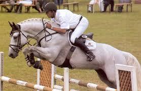 cellestial ses stallion cellestial oldenburg frozen semen equine semen