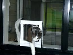 cat door home depot sliding glass cat door measuring for the correct pet door size sliding