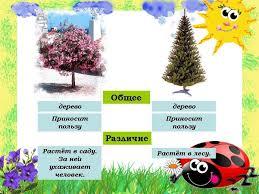 Дикорастущие и культурные растения Гипермаркет знаний дикораст растения