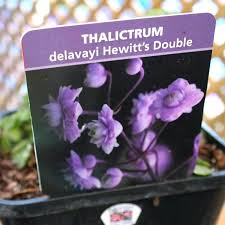 hewitts garden center picture of double hewitts garden center clifton park hewitts garden center