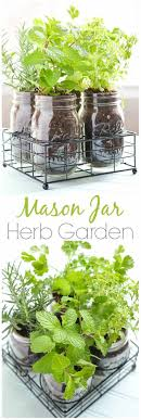 Kitchen Herb Garden Indoor 17 Best Ideas About Herb Garden Indoor On Pinterest Indoor Herbs