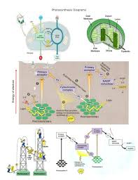 64 best Biology stuff images on Pinterest | School, Gym and ...