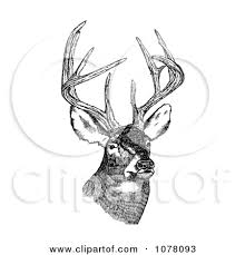 Sketch Clipart Deer Free Clipart On Dumielauxepices Net