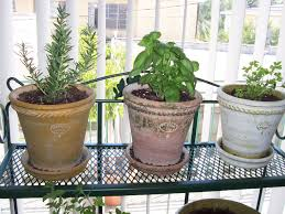 Small Picture Delighful Indoor Hanging Herb Garden By Turning A Towel Bar Into