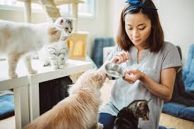 What Traits Make A Great Pet Sitter Blog Petcloud