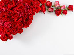 Red Roses Wallpapers - Top Free Red ...