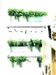 culinary herb garden kit indoor culinary herb garden starter kit hanging fairy pack