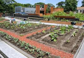 they can be transformed into living breathing home ecosystems with the installation of green roofs offering plenty of benefits to both homeowners and