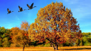 Can you spot these 5 signs of autumn? - CBBC - BBC