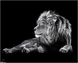 Lions Wallpaper Elegant Black Lion Hd Wallpaper