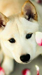 Free Cute Dog Wallpaper (Page 2) - Line ...
