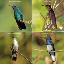 Birds Chart With Names In English Hummingbird Wikipedia