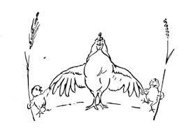 gallina y sus pollitos dibujo para colorear