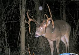 Deer Movement Chart Oklahoma Big Deer Moon Rut Guide 2018 Big Deer