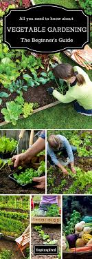 vegetable garden top 10 tips on starting your own update