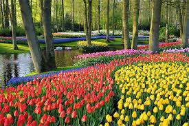 garden bulbs. Flower-bulbs-garden.jpg Garden Bulbs