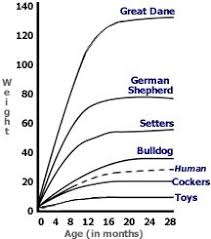 8 Best Puppy Growth Chart Images Cute Animals Dogs Cute Dogs