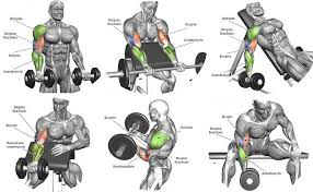 The Best Biceps Workout Chart Step By Step Samurai Matome
