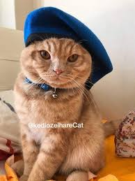 """kedi t on Twitter: """"Mavi bere düşmez yere... rabbim patinize zeval vermesin yiğitler....… """""""