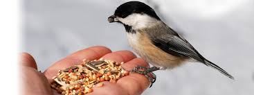 Conestogo Bird Feed - Stratford Ag Society Farmers Market