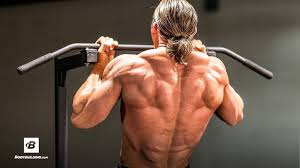 back anatomy program built by science bodybuilding
