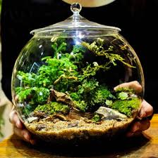 Large Decorative Glass Jars Glass Terrarium Container Bell Jars with Cover Large Terraria 30
