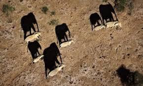 Deploy Drones All Parks To Tackle Kenya Bid National In z5wnHEvxCq
