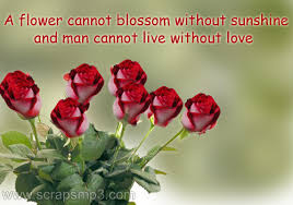 Beautiful Rose Flowers With Quotes