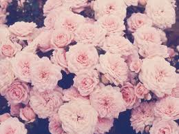 light pink floral background tumblr. Beautiful Floral Light Purple Flowers Tumblr On Pink Floral Background I