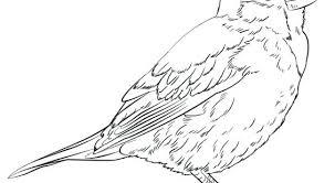 Bluebird Coloring Page Tacticaltraininginfo
