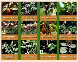 Medicinal Herbs And Their Uses Herbs And Their Uses