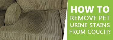 remove pet urine stains from couch