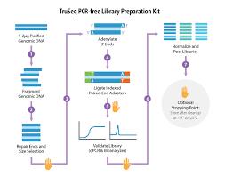 Illumina Sequencing Flow Chart Ngs Experimental Design Abm Inc