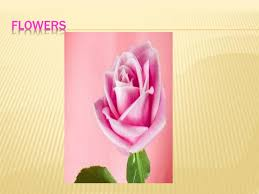 Ppt Flowers Ppt Flowers Powerpoint Presentation Id 2815905