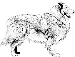 Border: Border Collie Coloring Pages