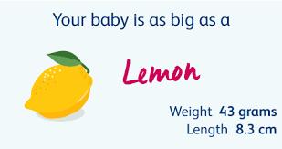 Diet Chart For 6 Week Pregnancy 14 Weeks Pregnant Your Pregnancy Week By Week Bounty