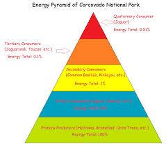 food web pyramid food web and energy pyramid corcovado national park