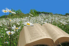 Image result for picture of a bible in a field