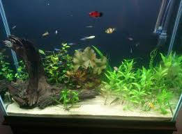 picture of plants and aquascaping