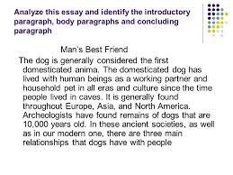 a dog essay best images about i want a dog teaching writing i want a dog my opinion essay best images about i want a dog teaching writing i want a dog my opinion essay