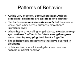 Patterns Of Behavior Interesting Animal Behavior Male Ostriches Compete For Females By Flapping Their