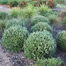 go gardening helping new zealand grow