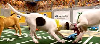 puppy bowl x halftime show. Contemporary Puppy On Puppy Bowl X Halftime Show