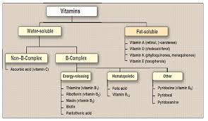 Water Soluble And Fat Soluble Vitamins Chart The Ultimate Guide To Taking Supplements While Fasting So