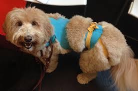 Group Classes - <b>Joyful</b> Dog | <b>Joyful</b> Dog