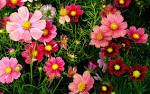 Flowers Wallpapers - Page 2 - HD Wallpapers